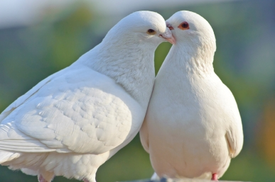 dove-joanmorais.jpg
